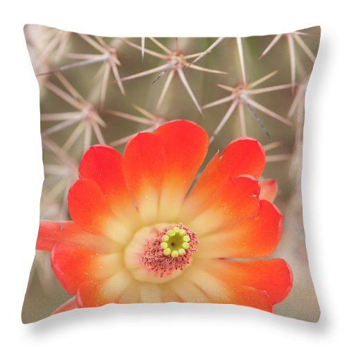 Orange Color Throw Pillow featuring the photograph Beautiful Claret Cup Hedgehog Blossoms by Lokibaho