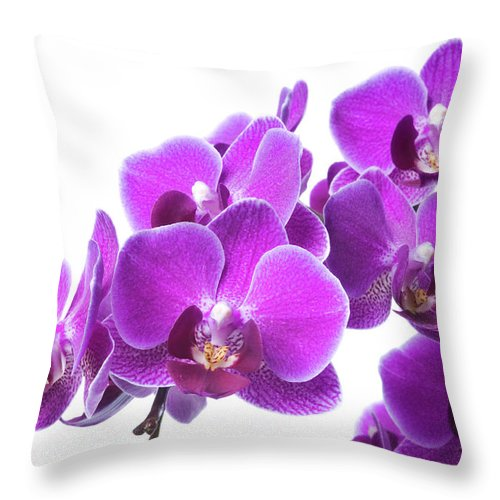 White Background Throw Pillow featuring the photograph Beautiful Purple Orchid On White by Digihelion