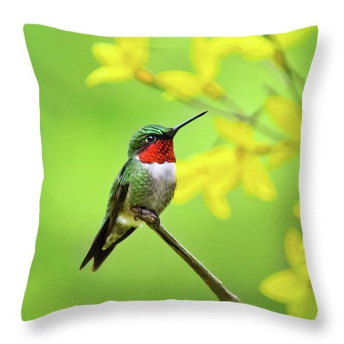 Hummingbird Throw Pillow featuring the photograph Beautiful Summer Hummer by Christina Rollo