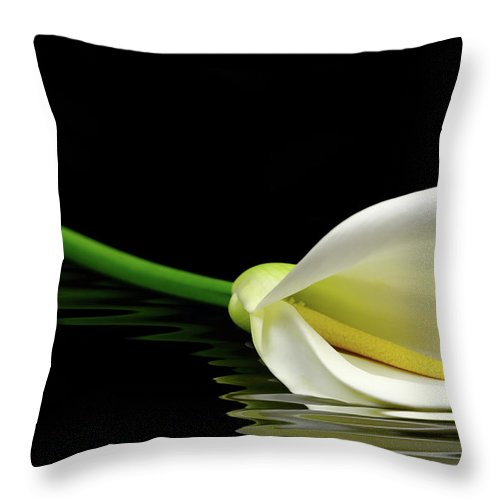 Lilies Throw Pillow featuring the photograph Beautiful White Calla Lily Reflected In Water by George Tsartsianidis