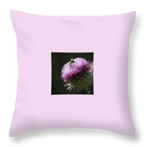 Bee Throw Pillow featuring the photograph Bee On Thistle by Nancy Ayanna Wyatt