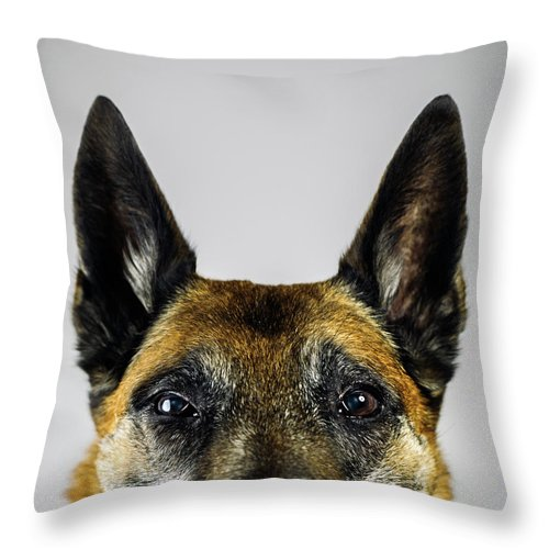 Pets Throw Pillow featuring the photograph Belgian Sheperd Malinois Dog Looking At by Joan Vicent Cantó Roig
