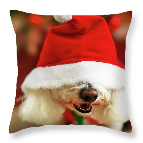 Pets Throw Pillow featuring the photograph Bichon Frise Dog In Santa Hat At by Nicole Kucera