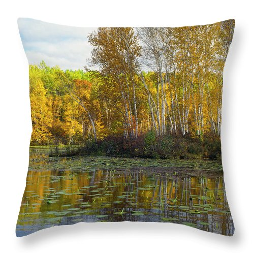 Birch Throw Pillow featuring the photograph Birch Island by Bruce Thompson