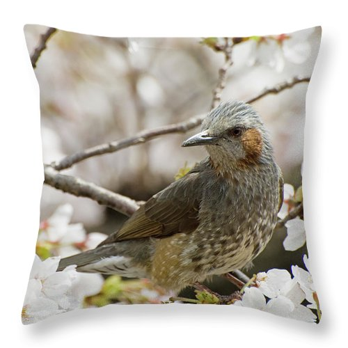 Alertness Throw Pillow featuring the photograph Bird Perched Among Cherry Blossoms by Philippe Widling / Design Pics