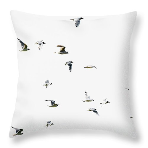 England Throw Pillow featuring the photograph Birds In Flight by Magnusson, Roine