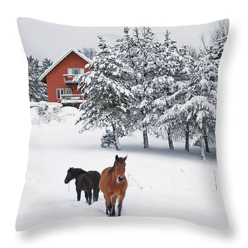 Horse Throw Pillow featuring the photograph Black And Brown Horse by Anne Louise Macdonald Of Hug A Horse Farm