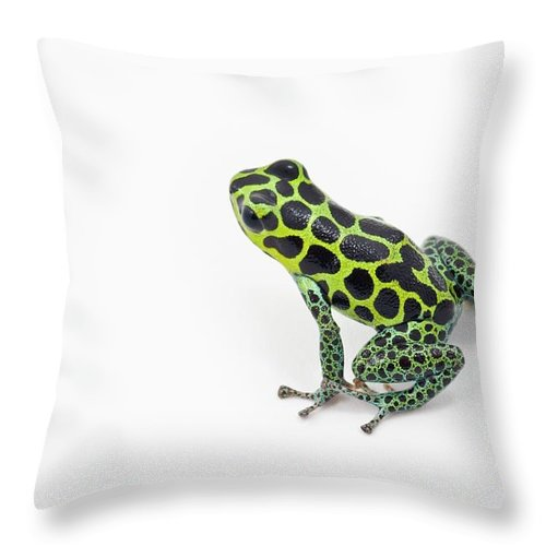 White Background Throw Pillow featuring the photograph Black Spotted Green Poison Dart Frog by Design Pics / Corey Hochachka
