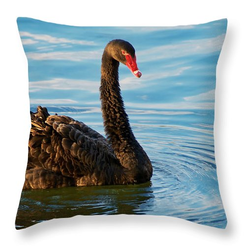 Black Swan Throw Pillow featuring the photograph Black Swan Making Ripples by Zayne Diamond Photographic