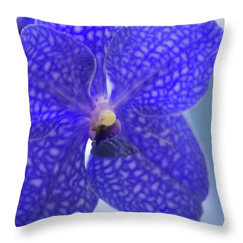 Rockville Throw Pillow featuring the photograph Blue Vanda Orchid Flower Close-up by Maria Mosolova
