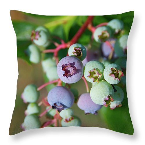 Large Group Of Objects Throw Pillow featuring the photograph Blueberries by ©howd, Howard Lau