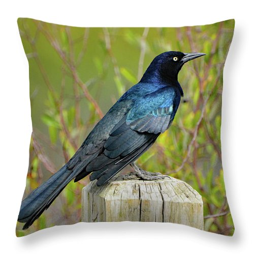 Grackle Throw Pillow featuring the photograph Boat Tailed Grackle by Jerry Griffin