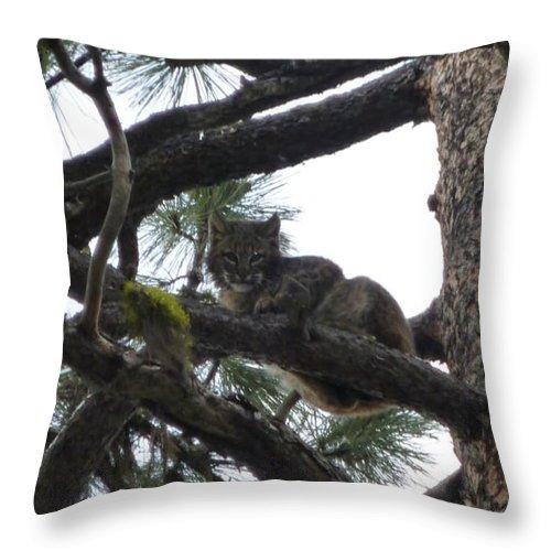 Bobcat Throw Pillow featuring the photograph Bobcat Cat Bob In A Tree by Garrett Butler