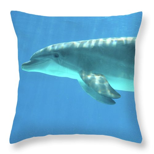 Underwater Throw Pillow featuring the photograph Bottlenose Dolphin by Anzeletti