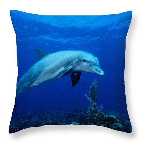 Underwater Throw Pillow featuring the photograph Bottlenose Dolphin,tursiops by Gerard Soury