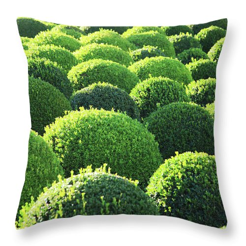 Tranquility Throw Pillow featuring the photograph Boxwood, Shape, Pattern by Hiroshi Higuchi
