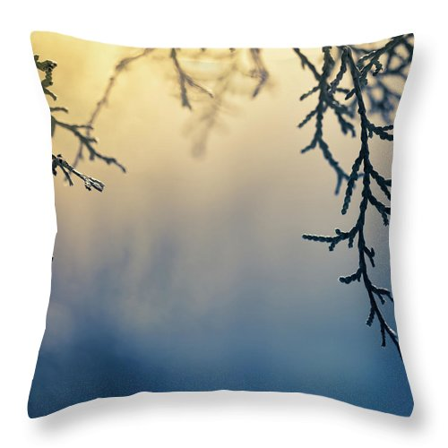 Saturated Color Throw Pillow featuring the photograph Branch Of Pine Tree by Jeja