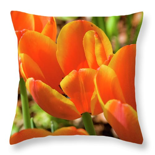 Flowerbed Throw Pillow featuring the photograph Bright Orange Tulips by Earleliason
