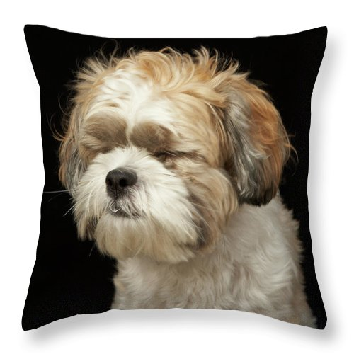 Pets Throw Pillow featuring the photograph Brown And White Shih Tzu With Eyes by M Photo