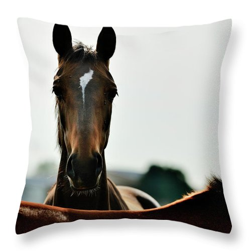 Horse Throw Pillow featuring the photograph Brown Horse Back Lit by Akrp