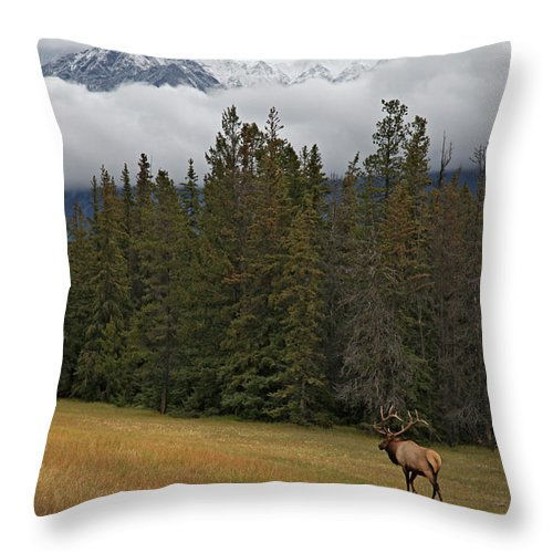 Snow Throw Pillow featuring the photograph Bull Elk In Meadow With Snow Covered by Guy Crittenden