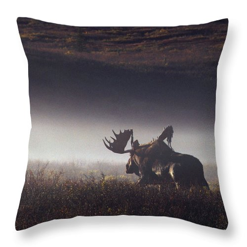 Majestic Throw Pillow featuring the photograph Bull Moose Alces Alces Walking Through by Johnny Johnson