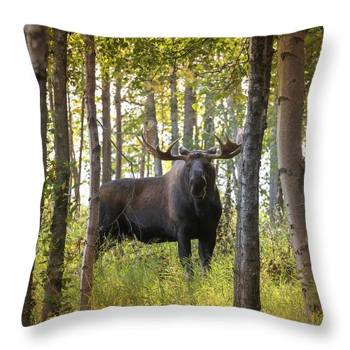 Alaska Throw Pillow featuring the photograph Bull Moose In Fall Forest by Scott Slone