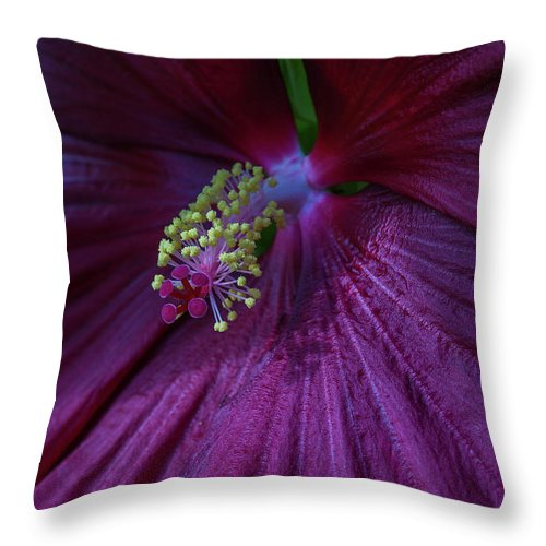 Hibiscus Throw Pillow featuring the photograph Burgundy Hibiscus by Linda Howes