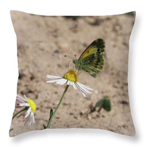 Betty Depee Throw Pillow featuring the photograph Butterfly Day by Betty Depee