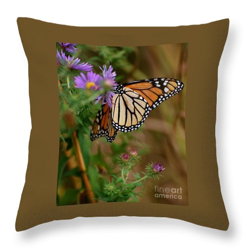 Butterfly Throw Pillow featuring the photograph Butterfly by Deb Cawley