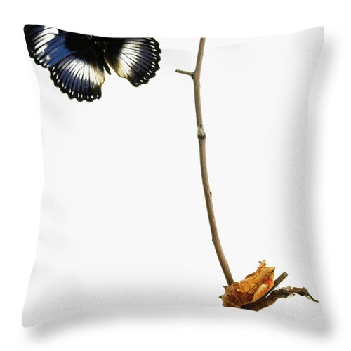 White Background Throw Pillow featuring the photograph Butterfly Transformation by David Arky