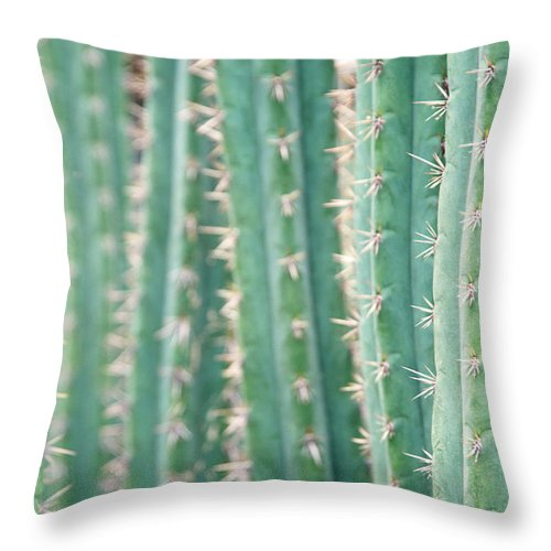 In A Row Throw Pillow featuring the photograph Cacti Echinopsis Pachanoi by Liz Whitaker
