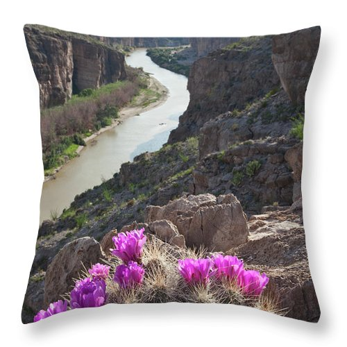 Chihuahua Desert Throw Pillow featuring the photograph Cactus Flowers Overlooking The Rio by Dhughes9