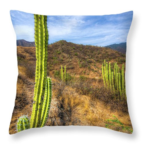 Grass Throw Pillow featuring the photograph Cactus Mountain by Alejandro Tejada