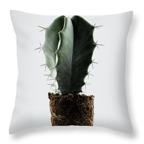 White Background Throw Pillow featuring the photograph Cactus On White Background by Chris Stein