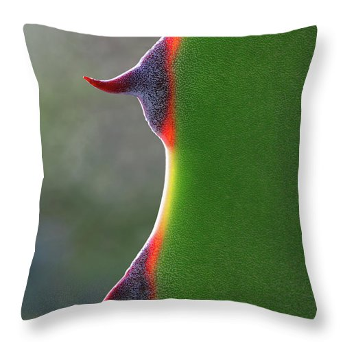 Needle Throw Pillow featuring the photograph Cactus by Patricia Fenn Gallery