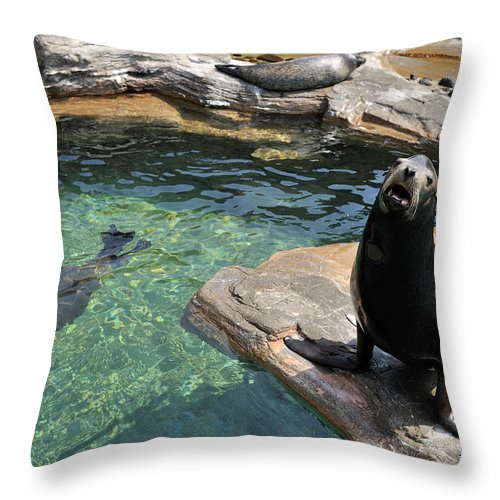 Sea Lion Throw Pillow featuring the photograph California Sea Lion And Spotted Seal by T. Nakamura Volvox Inc.