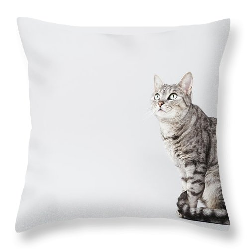 Pets Throw Pillow featuring the photograph Cat Looking Up by Lisa Stirling