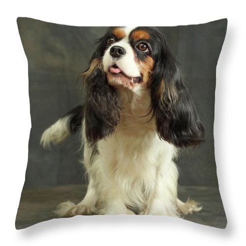 Pets Throw Pillow featuring the photograph Cavalier King Charles Spaniel by Sergey Ryumin