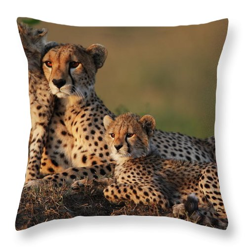 Kenya Throw Pillow featuring the photograph Cheetah Family by Gp232
