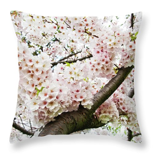 Outdoors Throw Pillow featuring the photograph Cherry Blossom by Sky Noir Photography By Bill Dickinson