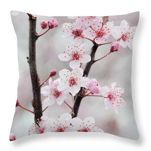 Cherry Throw Pillow featuring the photograph Cherry Plum Purple Plum Pink Flowers On by Martin Ruegner