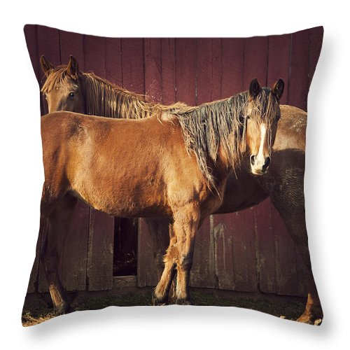 Horse Throw Pillow featuring the photograph Chestnut Horses by Thepalmer