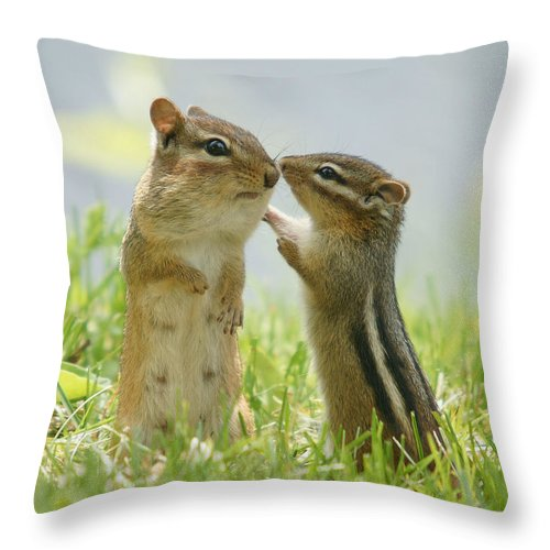 Grass Throw Pillow featuring the photograph Chipmunks In Grasses by Corinne Lamontagne