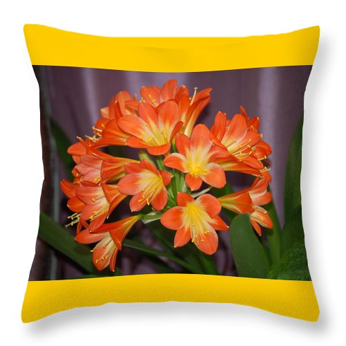Flowers Throw Pillow featuring the photograph Clivia Blossoms by Nancy Ayanna Wyatt