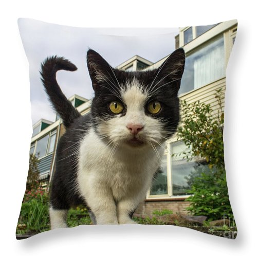 Domestic Cat Throw Pillow featuring the photograph Close Up Cat On The Street by Raymond De la Croix