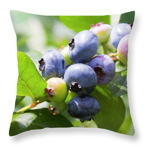 Yamanashi Prefecture Throw Pillow featuring the photograph Close-up Of Blueberry Plant And Berries by Daisuke Morita