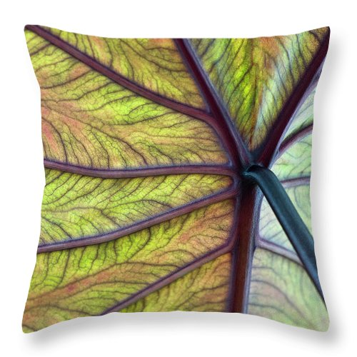 Voodoo Doll Throw Pillow featuring the photograph Close Up Of Colocasia Esculenta Leaf by Deb Casso