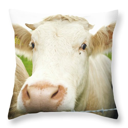 Free Range Throw Pillow featuring the photograph Close Up Of Cows Face by Peter Muller