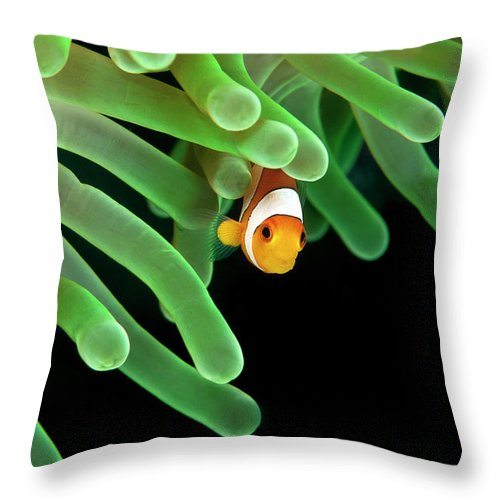 Underwater Throw Pillow featuring the photograph Clownfish On Green Anemone by Alastair Pollock Photography